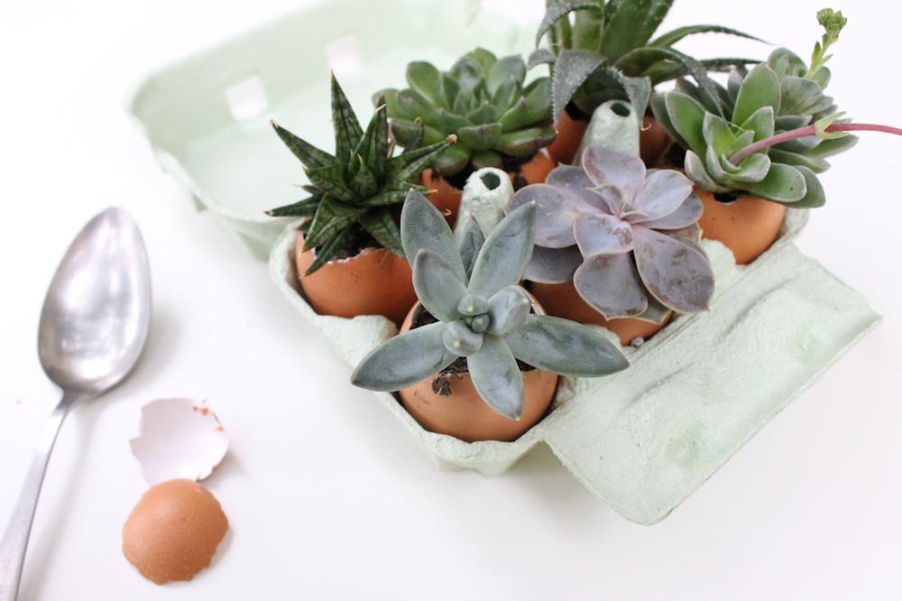 Planter des succulentes dans des œufs