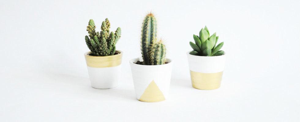 Customiser des pots à cactus
