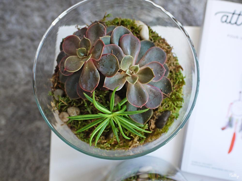 Fabriquer un terrarium avec des succulentes