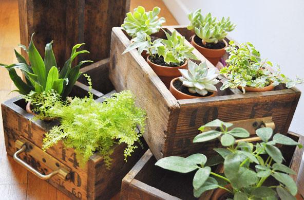 Détourner des tiroirs anciens en jardinières